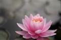 etheral flower