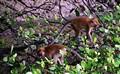 Monkeys Butterworth Malaysia