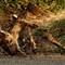 IMG_0815- dead deer