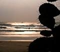 Prickly Beach