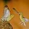 bird+fight_4