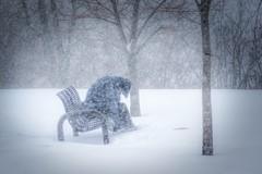 Eastern Blizzard