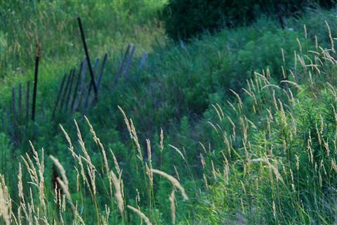 Slender Reeds Redux