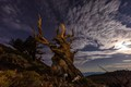 The Serious Moonlight on Bristlecone Pine