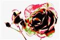 Multi Coloured Rose img.2144
