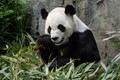 A panda walks into a bar, eats, shoots and leaves.....be careful where you place he punctuation.