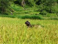 nepal2008_1321