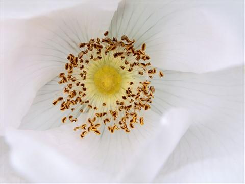 Blüte im Schloßgarten, Benrath