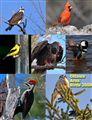 Bird Calendar & Show