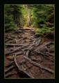 Cascade Park Tree Roots