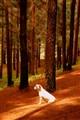Lost doggie