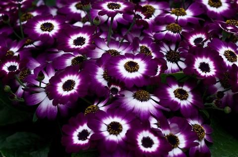 -Spring in botanic- Yeah Right!--14