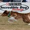 Incredible_Dog_20110402_183