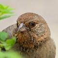 Bird Stalking