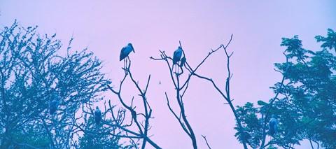 Open bill Storks,morning assembly,Saltlake-Kolkata.
