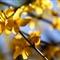 printemps-0565