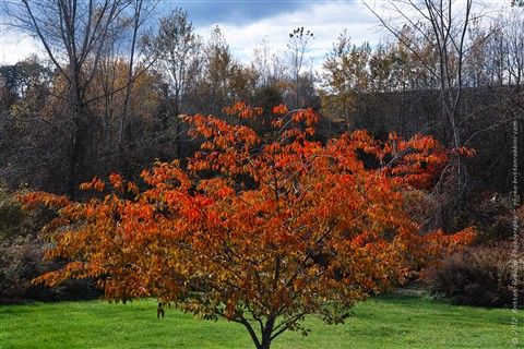 Fall 2012 Colors - SDIM6531