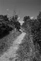 BW Path