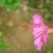 Copy of flora 016