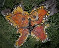 Butterfly Stump