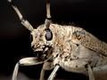 Bug on window board