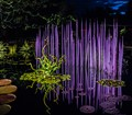 Chihuly Glass in Lily Pond
