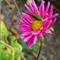 HS10 Flower Shots