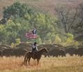 50th Annual Custer Buffalo Roundup