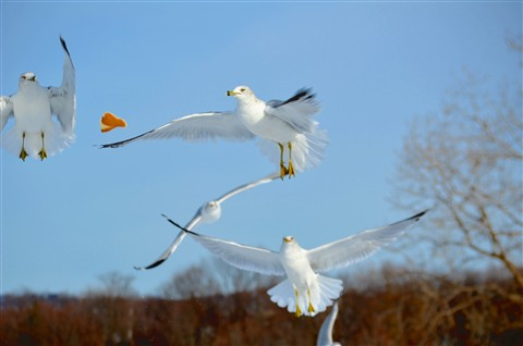 DSC_0416  sea gulls