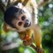 squirrel_monkey02