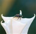 Beetle says tasty