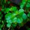 Jade-Photo-V2-Web