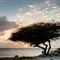 Aruban Tree Sunset