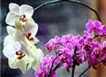 wonder-orchids