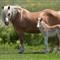 Foal 2011