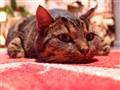 Granma's cat; Nökö