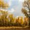 Fall Cottonwoods (Gros Ventre, Teton NP)