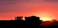 Sunset Fertilizing