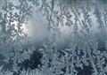 FrostForest