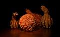New England Gourds...