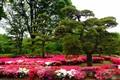 Ni No Maru Garden, Tokyo