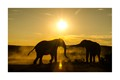 Elephants at play at wintery dusk in the dust.