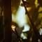 Pixel Poetry Digital Retouching-3930: Glowing Sap