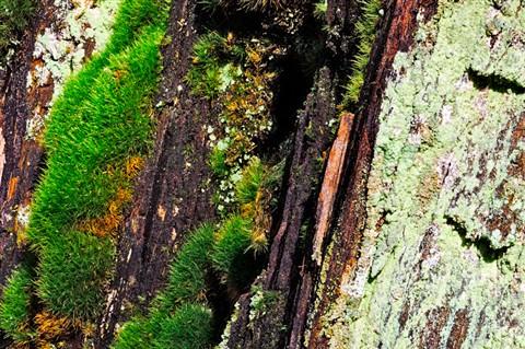 Moss, Tree Bark