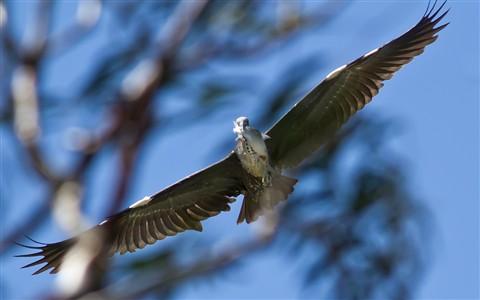 Grey Heron_web