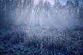 Blue Winter_magic small