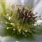 Flower_macro_April20'13-H
