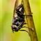 mosca-árvore-curvas