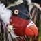 16-11-21 P1740251 Parrot mask