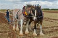 AN 037 Ploughing Shires